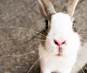 animals, bunny, and Hiroshima image