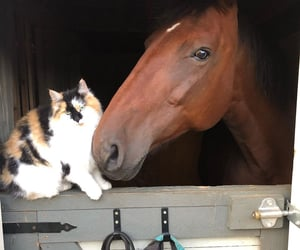 animals, barn, and cats image
