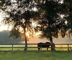 country living, equestrian, and farm image