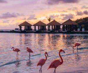beach, flamingo, and photography image