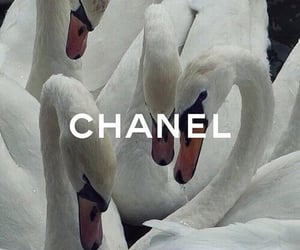 chanel, aesthetic, and Swan image
