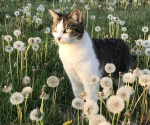 cat, dandelion, and cute image