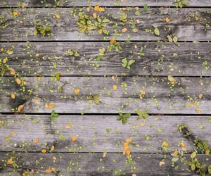 autumn, wood, and cozy image