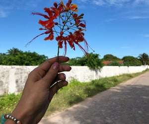 autoral, flowers, and inspiration image