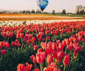 flowers, nature, and places image