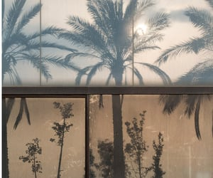 theme, aesthetic, and palm trees image