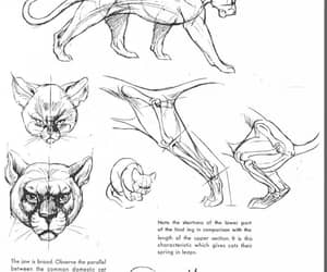 cat, drawing reference, and cat reference image