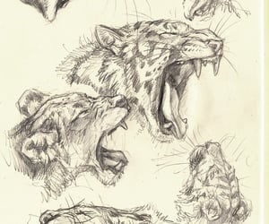 cat, drawing reference, and cat drawing reference image