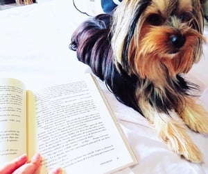 best friend, book, and pet image