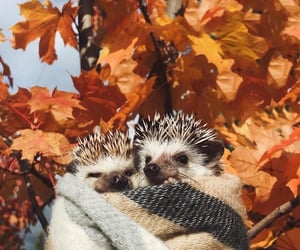 autumn and hedgehog image