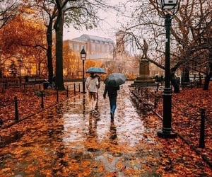 autumn, fall, and rain image