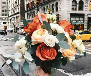 flowers, rose, and city image