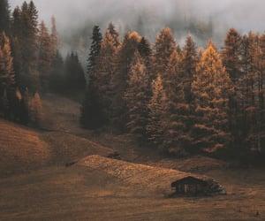 autumn, fog, and autumn colors image