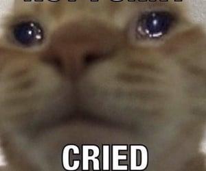 meme, cat, and sad image