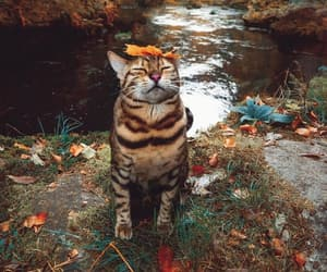 cat, autumn, and fall image