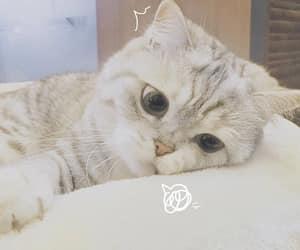 cat, cute cat, and sad image