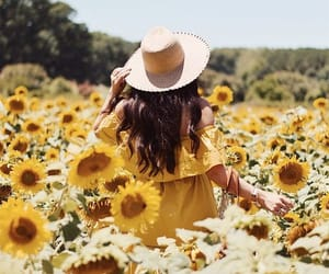 yellow and sunflowers image