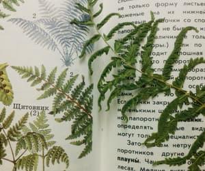 book, fern, and herbarium image