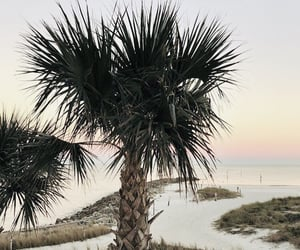 palm trees, places, and summer image