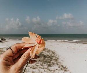 autoral, beach, and flower image