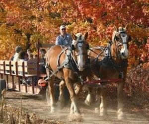 fall autumn, colorgala@whi, and hot chocolate image