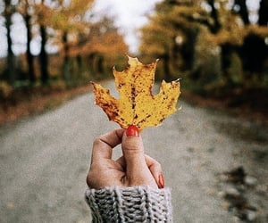 autumn, fall, and color image