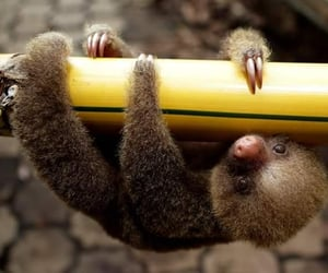 cute, baby, and sloth image