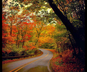 autumn, warm colors, and colors image
