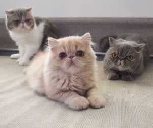 cat and cats image