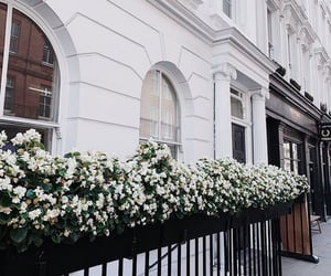 flowers, street, and architecture image
