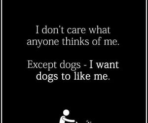 quotes, dog, and funny image