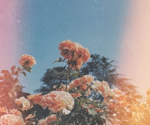flower, aesthetic, and exo image