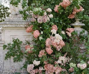 decor, flowers, and garden image
