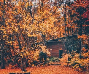 autumn, autumnal, and cabin image