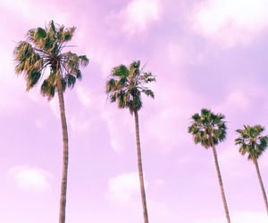 lavender, lilac, and pastel image
