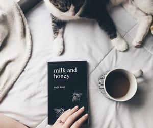and, animal, and bee image