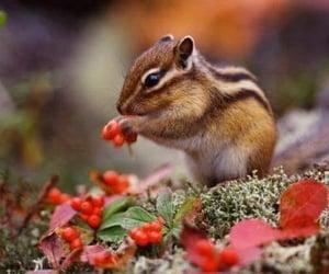 animal, chipmunk, and nature image