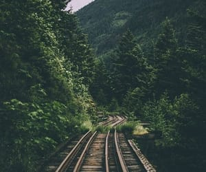 nature, wallpaper, and forest image