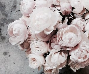 flowers, rose, and rose gold image