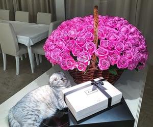 cat and luxury image
