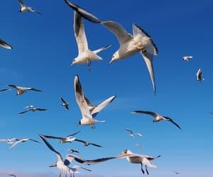 baltic, birds, and beautiful image
