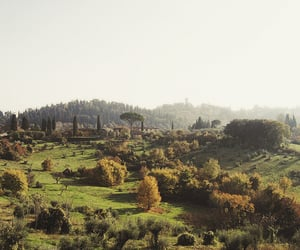 florence, nature, and tree image