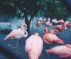 flamingo, pink, and animals image