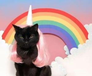 cat, rainbow, and unicorn image