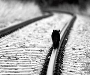 black and white, railway, and cat image