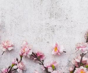 cherry blossom, flores, and cerezo image