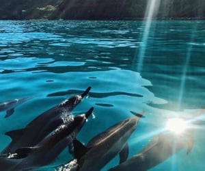 dolphin, summer, and nature image