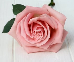 flor and rosa image