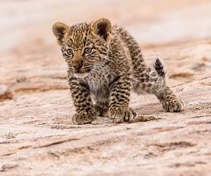 animal, animals, and baby animal image