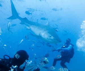 diving, Island, and holiday image
